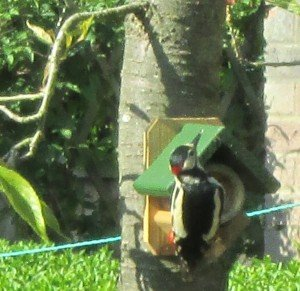 Birding Norfolk-Tours